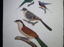 Les Oiseaux de l'Egypte et de la Syrie, 14 magnifiques gravures par procédé Jacomet (Le Jardin de Flore 1979)